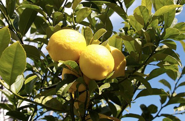 citroen-maand