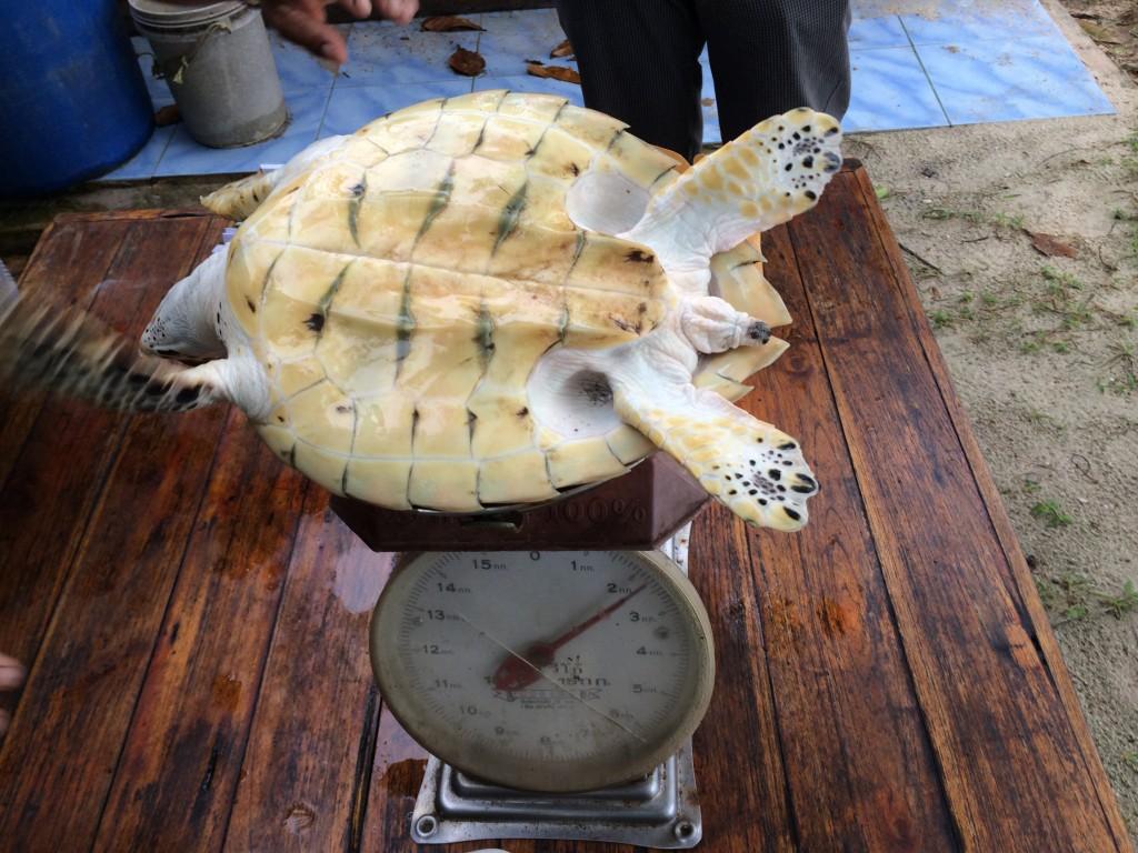 wegen-schildpad
