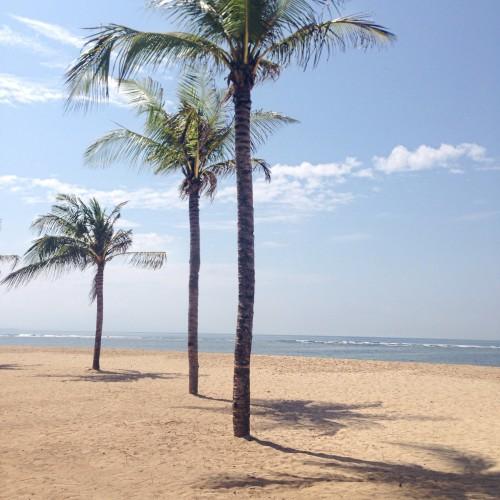 palmbomen-foto
