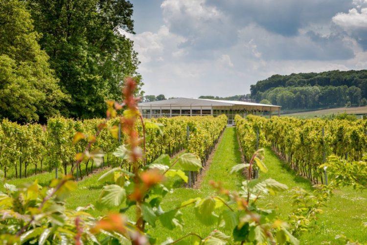limburg-wijnrestaurant-wijnranken-diner