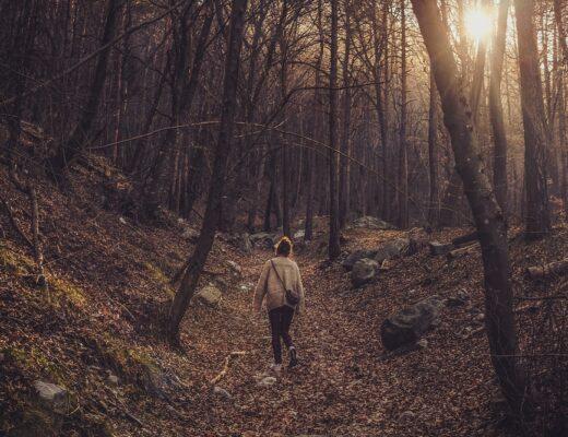 cristina-gottardi-forest-walk
