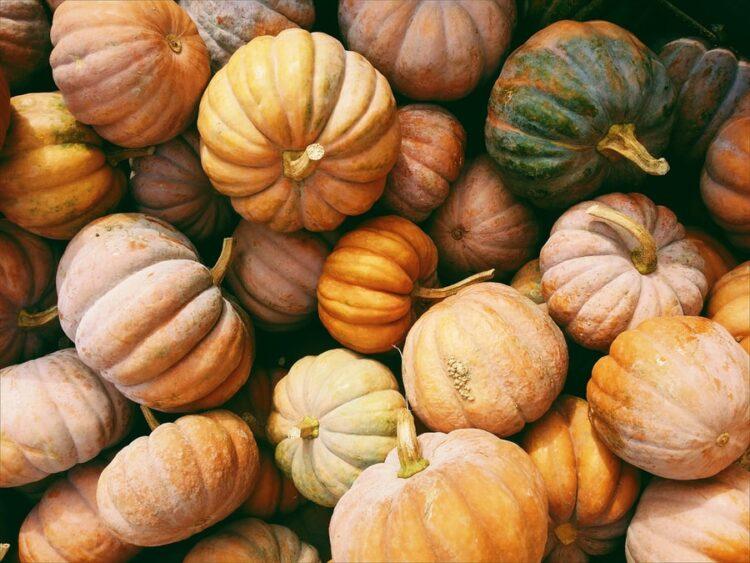pompoen-pumpkin